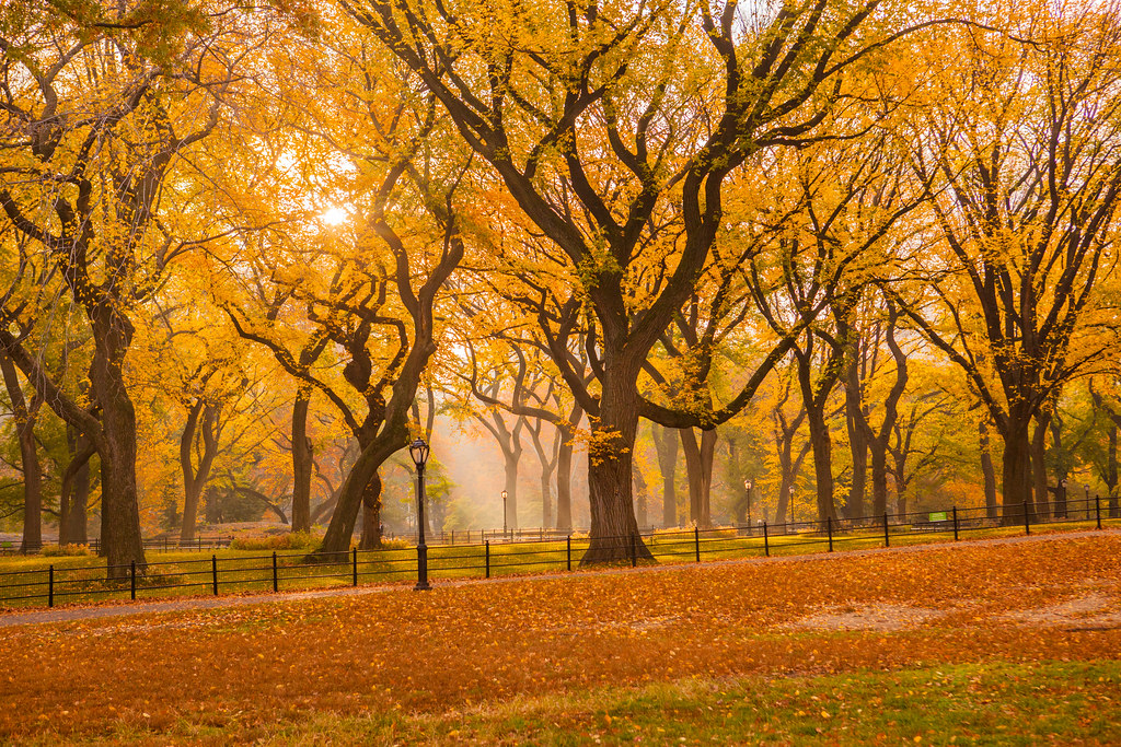 Fall Vermont Wallpaper Fall 2015 In Central Park Anthony Quintano Flickr