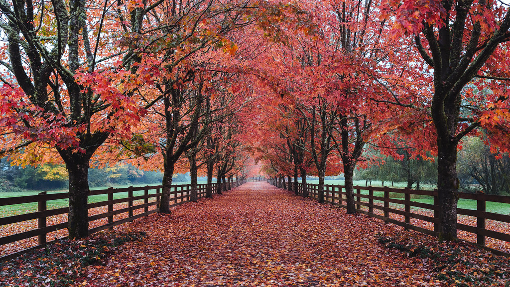 Fall Trees Wallpaper The Driveway North Bend Wa Tumblr Instagram Www