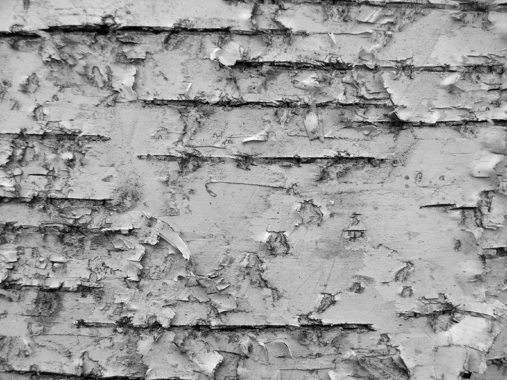 Nature Wallpaper Hd 3d Birch Bark The Chaboiganing Nature Preserve Has A Large