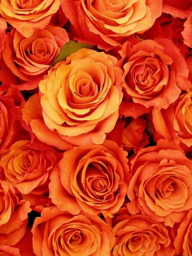 White Flower Wallpaper 3d Gathering Roses Dark Orange Tanakawho Flickr