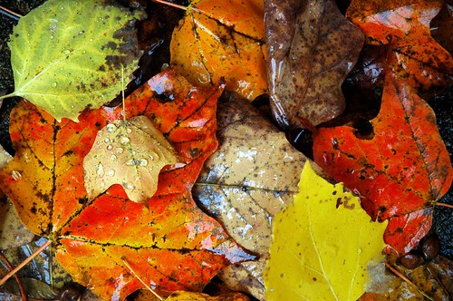 Fall Autumn Wallpaper Free Fall Leaves Martin Mcreynolds Flickr