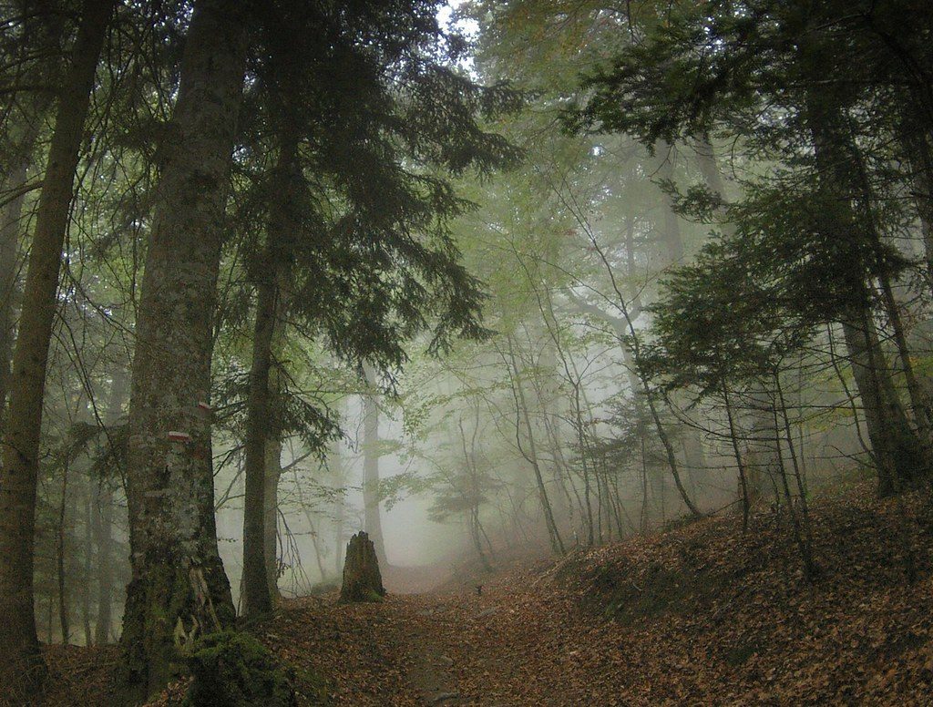 Mobile Hd Wallpaper 3d Fog In A Pyrenean Forest I M Totally Flattered That So