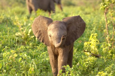 Curious Elephant Baby | Playful and lovely little creatures,… | Flickr