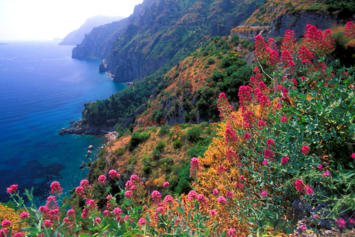 Beautiful Hd 3d Flowers Wallpapers Italy Amalfi Coast Wildflowers Hz Gene Flickr
