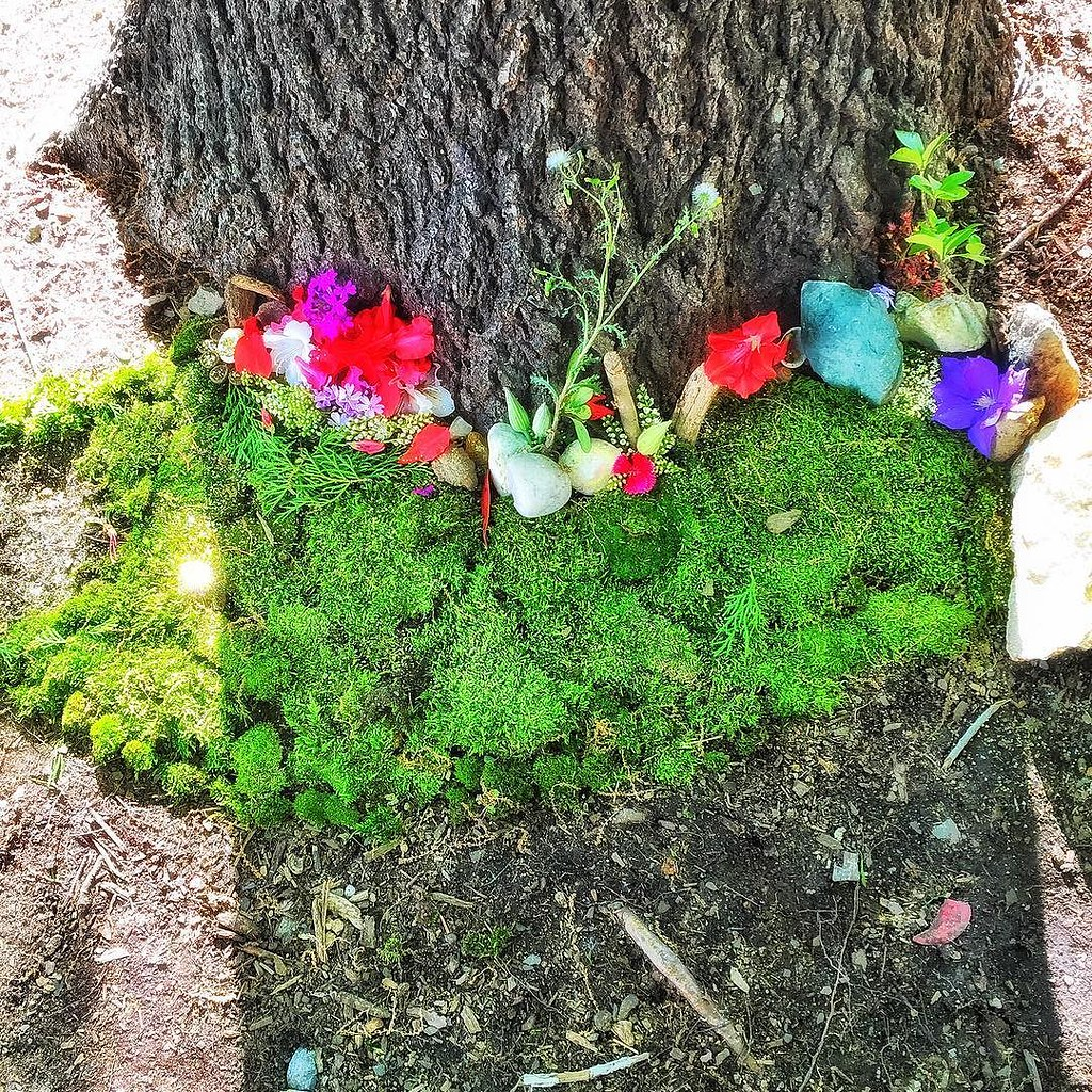 Admirable Her Friend Made A Little Fairy Garden Flowersand My Daughter Flickr My Little Pony Fairy Garden Little Unicorn Fairy Garden Canada Her Friend Made A Little Fairy Garden My Daughter garden Little Fairy Garden