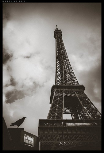World Map Wallpaper Black And White Paris View On The Eiffel Tower With A Black Crow In