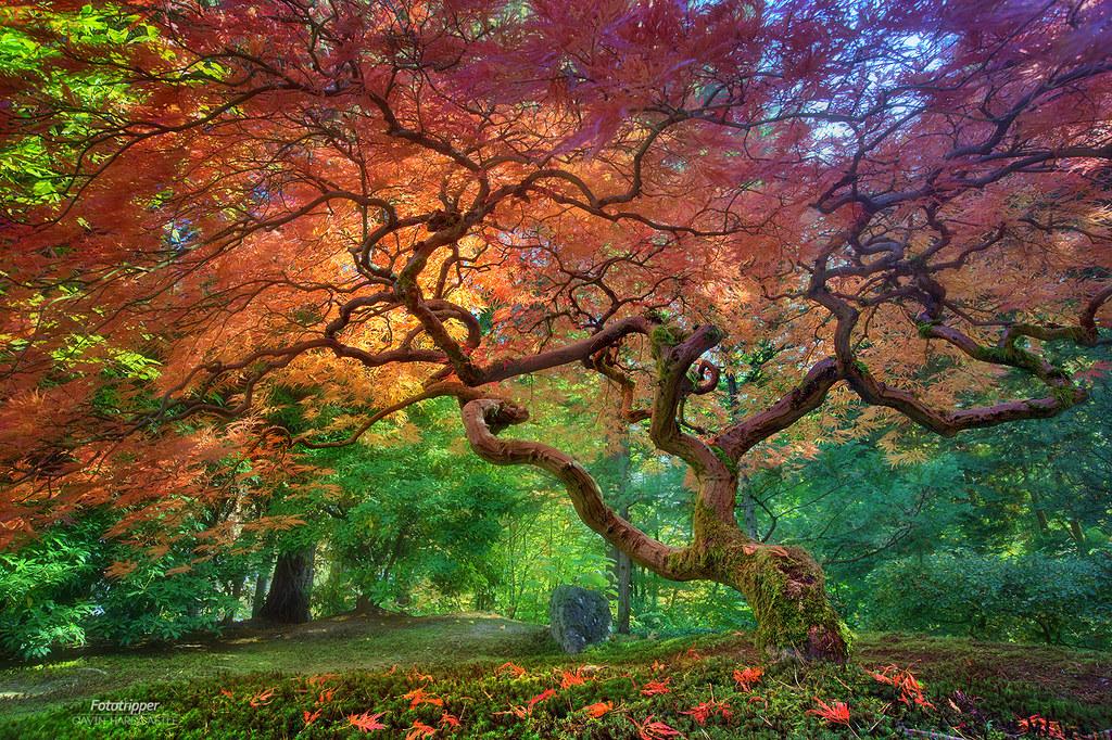 Japan Fall Colors Wallpaper Arterial Spray Portland Japanese Garden Under This