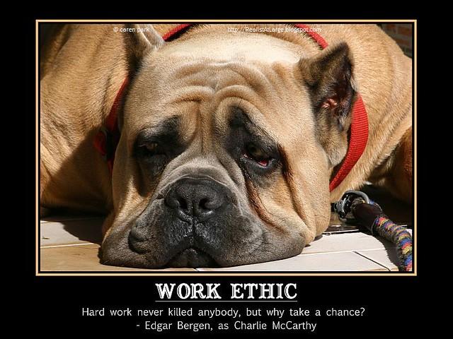 Memes Wallpaper 3d 009t Work Ethic Edgar Bergen 57326 Available As 12