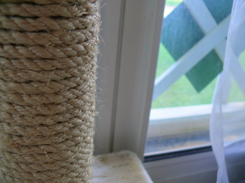 White Cat Scratching Post 094 366 Scratching Post In Hdr The Cat Doesn 39t Use It