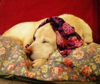 Fru-Fru Scented Dog Bed   Pretty dog bed with blue chintz ...