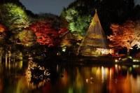 Japanese garden at night | Rikugi-en, Tokyo | * Yumi ...