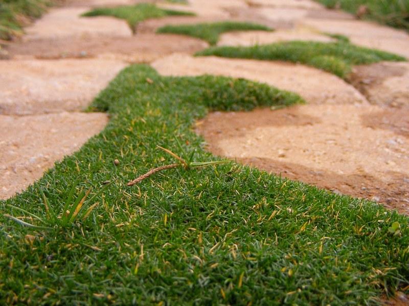 Large Of Irish Moss Ground Cover