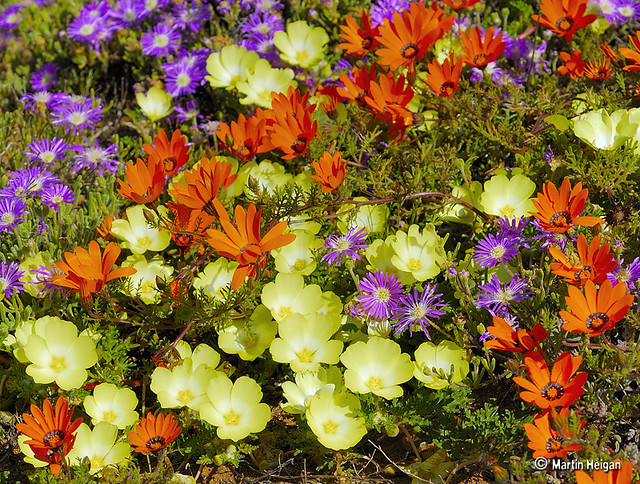 A To Z 3d Name Wallpaper The Wild Flowers Of Namaqualand The Wild Flowers Of