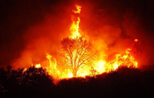 Tree On Fire Irvine Enoch Kim Flickr