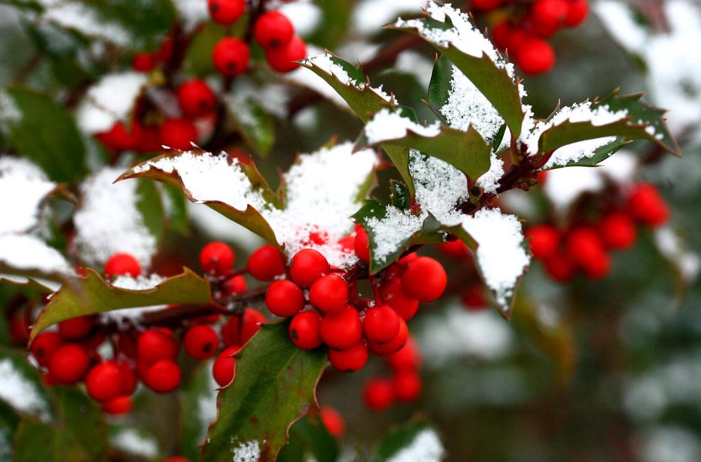 3d Fruit Wallpaper Snowy Holly Liz West Flickr