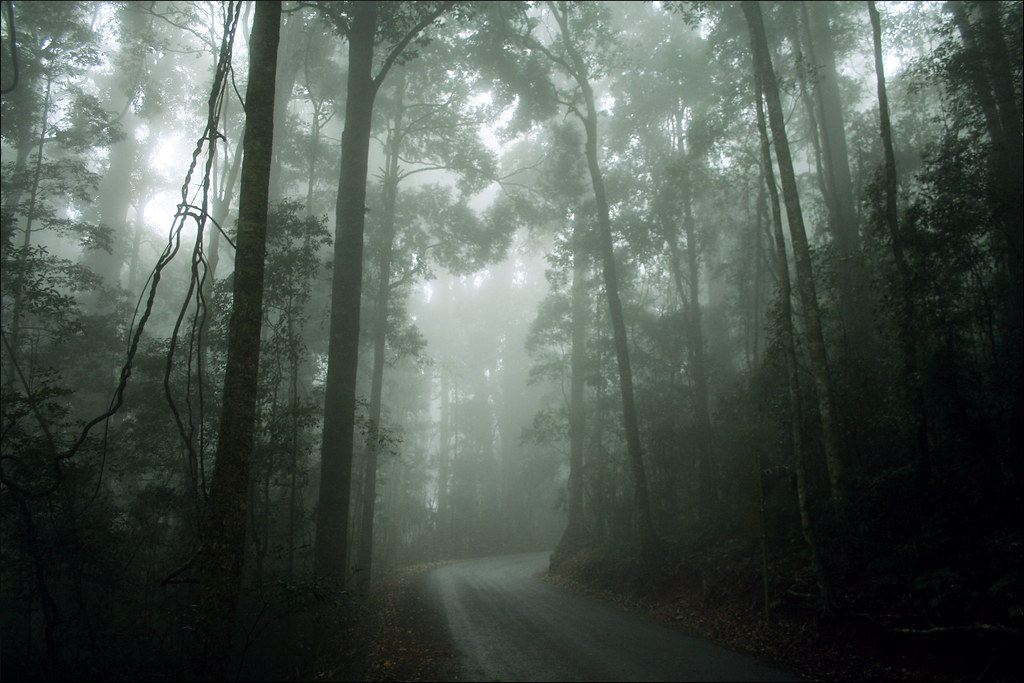 Christmas Wallpaper Hd 1920x1080 Misty Forest Road Taken In Lamington National Park In