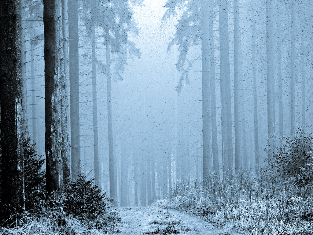 3d Wallpaper Cute Baby Winterwald Forest In Winter Thanks For All Visits