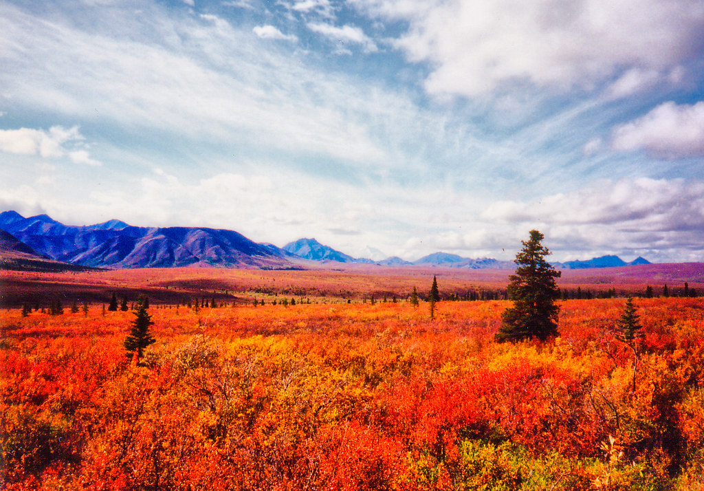 Free 3d Fall Wallpaper Autumn Tundra I Spent The Summer Of 95 In Alaska