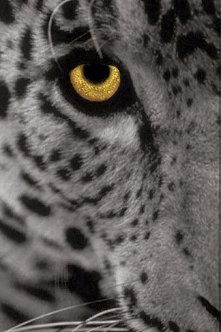 3d Iphone Wallpapers Free Leopard Icon Gray Visit Www Iphonesavior Com And Click