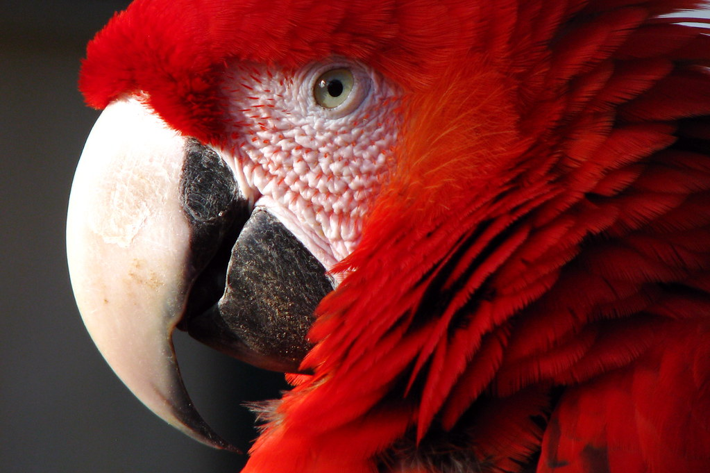 3d Animal Wallpaper 3d Fish Wallpaper Red Parrot Close Up Of A Red Parrot Coralie Mercier