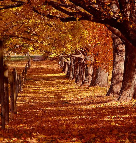 Free Fall Season Desktop Wallpapers Autum Landscape Autum Terry Taylor Flickr