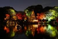 Japanese garden at night (wide angle version) | Rikugi-en ...