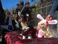 playdog   Hugh Hefner Dog, and Playboy Bunny dog, 19th ...