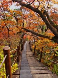 Fall Colors-Baemsagol Valley-Jirisan National Park-South K ...