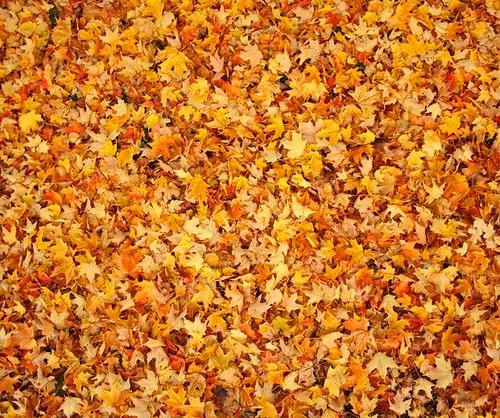 Wallpaper Laptop 3d Lots Of Leaves Fallen Leaves Fill The Frame In In