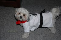 Stupid Dog Costume | Blanche had to buy a stupid costume ...