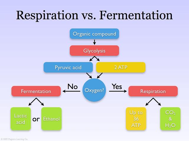 respiration vs fermentation venn diagram