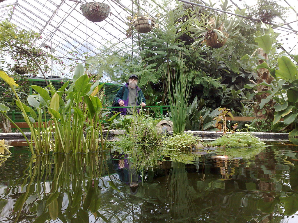 As 3d Wallpaper Gnome Scaring Fish At The Horticultural Centre Wythenshaw