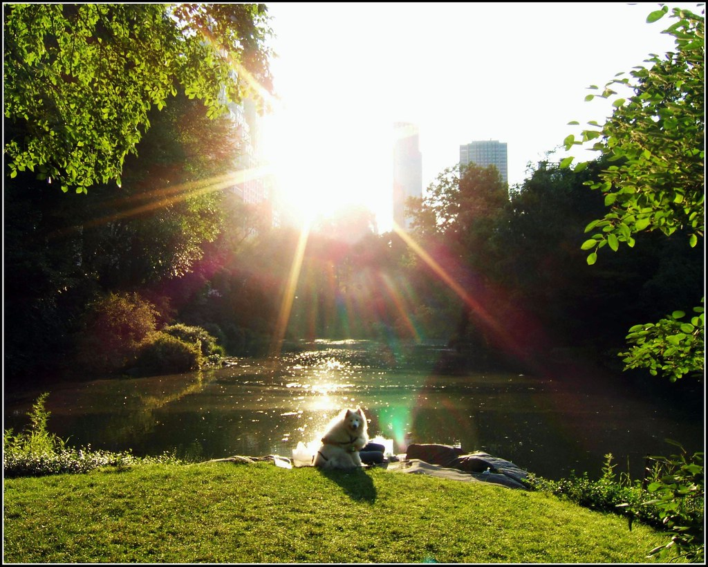 Quotes Wallpaper Free Download Central Park Quot Dog In The Sun Quot Near Central Park South