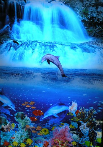 Good Evening Hd Wallpaper Dolphin Tropical Waterfall Moving Picture 3dwallart Flickr