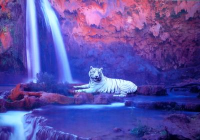 Free Animated Fall Desktop Wallpaper Animated White Tiger And Waterfall Picture Enhance Your