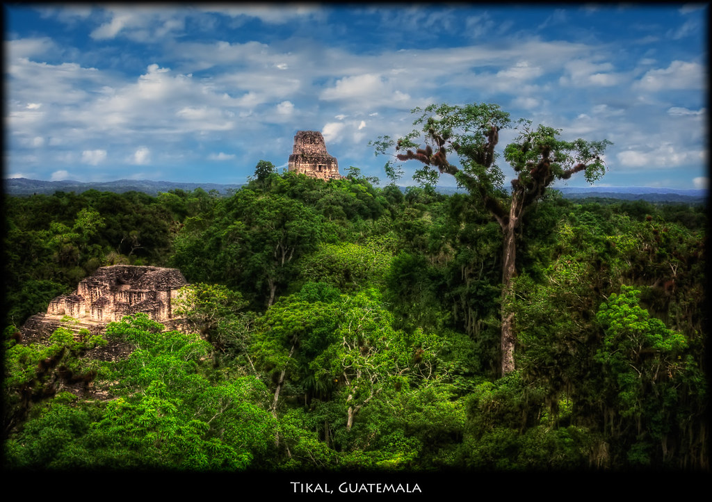 Wallpaper Coffee 3d Tikal Guatemala View Of The Jungle And Other Tikal