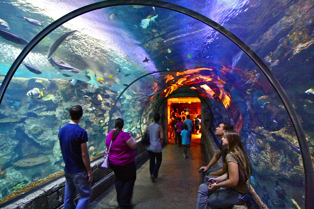 Shark Reef Aquarium. Las Vegas | Flickr   Photo Sharing!