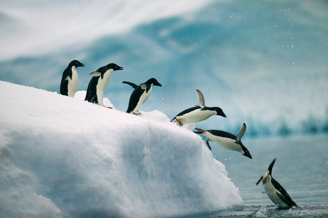 3d Wallpaper Ocean Crb001004 Antarctica Penguins Jumping Into Ocean