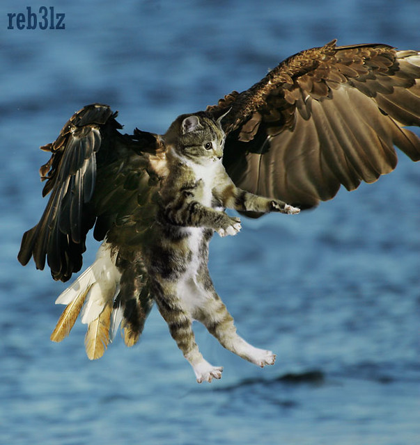 Wallpaper Monster Inc 3d Bird Cat Flying Eagle Reb3lz Inc Flickr