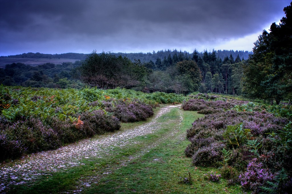 My Photo 3d Wallpaper New Forest Landscape A Grey Early Morning In The New