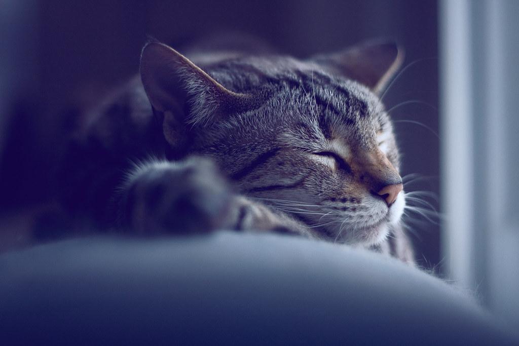 Cute Map Wallpaper Sleeping Cat Michael Carian Flickr