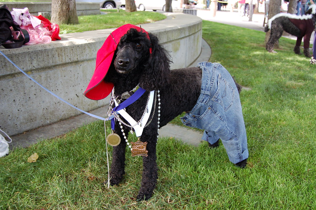 Dog in 80s Costume and Jeans
