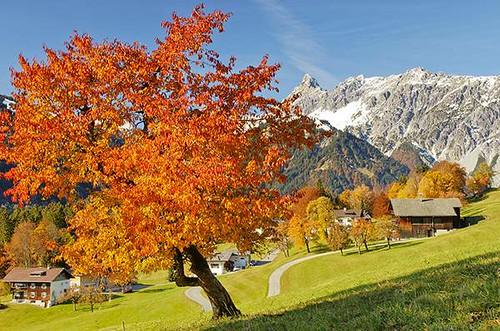 Free Wallpaper Fall Colours Herbst In Den Bergen Herbst Im Montafon Im Hintergrund