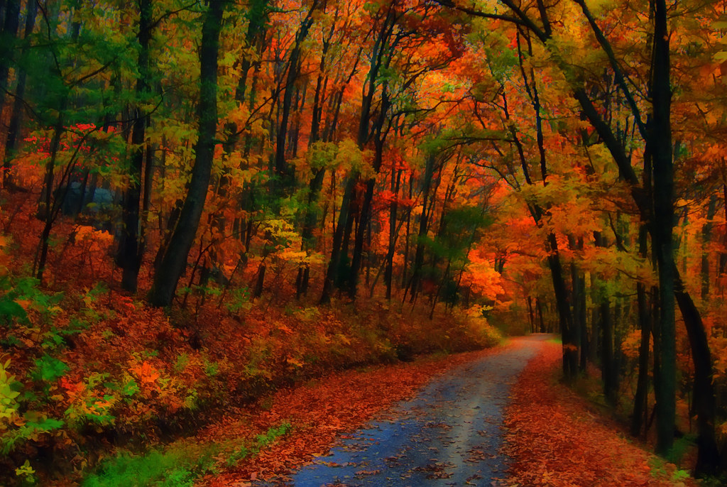 Fall Forest Wallpaper For Desktop George Washington National Forest Having Photographed