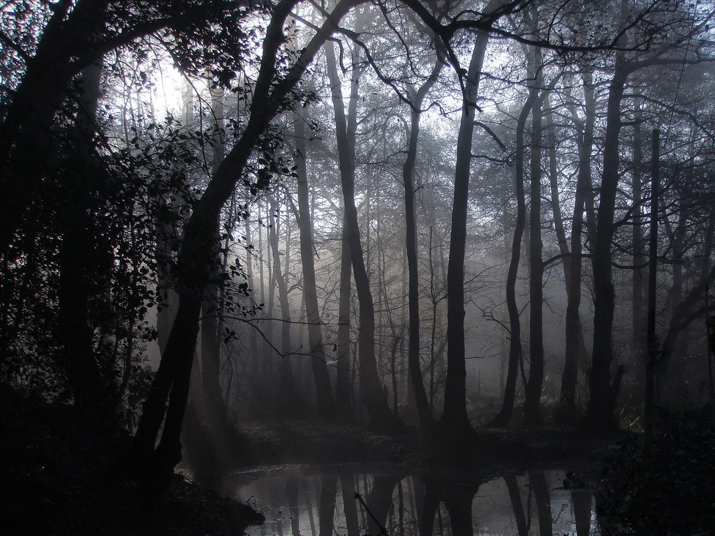 3d Wallpaper World Map Spooky Forest In The Morning A Misty Morning When I Was