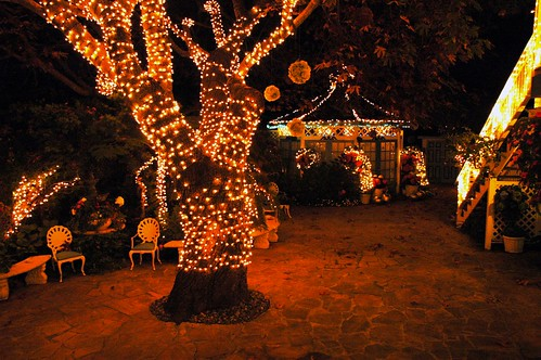Camera Girl Wallpaper Secret Garden At Night With The Dancing Tree And Chairs W