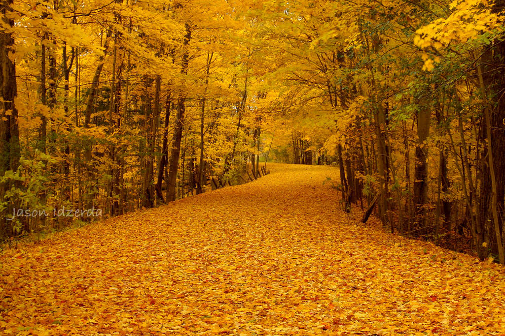 3d White Brick Wallpaper Yellow Leaf Road Another One From My Walk Yesterday The