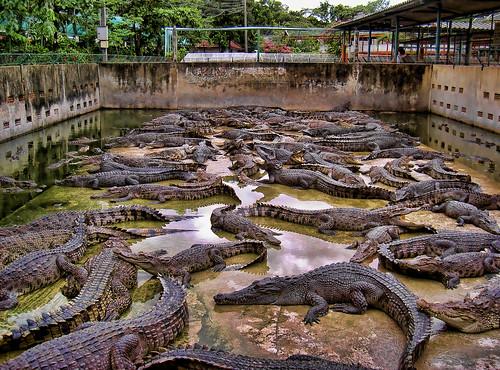 Hd Photos 3d Wallpaper Crocodile Farm In Thailand Cooper Flickr