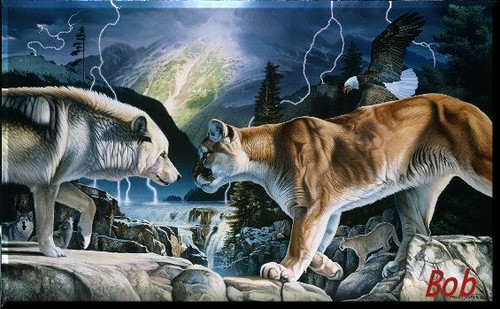 3d All Animal Wallpaper Wolf Vs Cougar This Power Full White Wolf Is Not Backing
