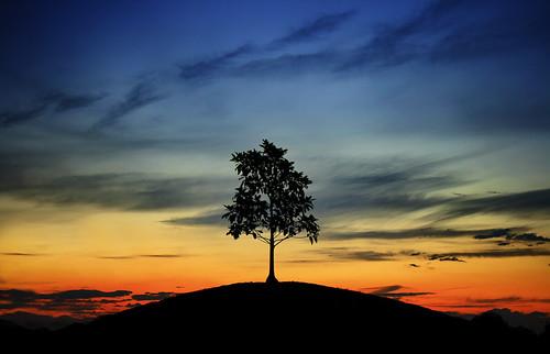 Sunrise 3d Wallpaper Lone Tree On Sunset Hill Rickstarrr Flickr